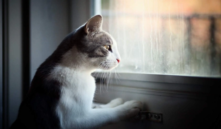 10 Signs of Separation Anxiety for Cats & What To Do About It